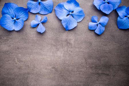 fragility: Blue hydrangea on the grey background.