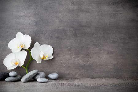 orchidee: Spa pietre e orchidea bianca su sfondo grigio.