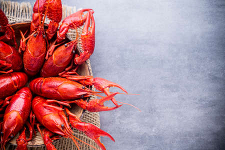 Cooked river crayfish on the grey background.