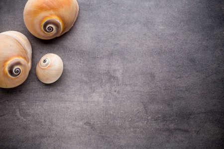 petoncle: Pétoncle sur la surface de pierre grise. fond Voyage.