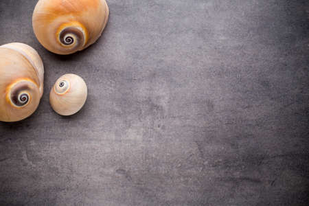 choral: Scallop on gray stone surface. Travel background.