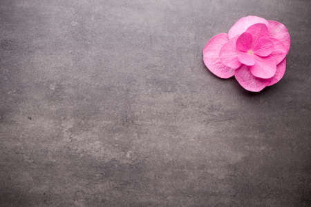 spa flower: Close up view of spa theme objects on grey background. Stock Photo