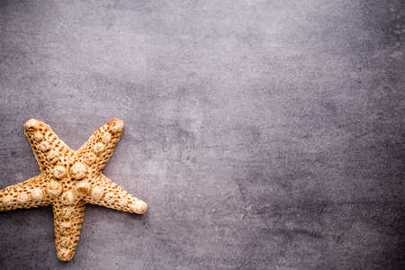 ocean and sea: Starfish on gray stone surface. Travel background.