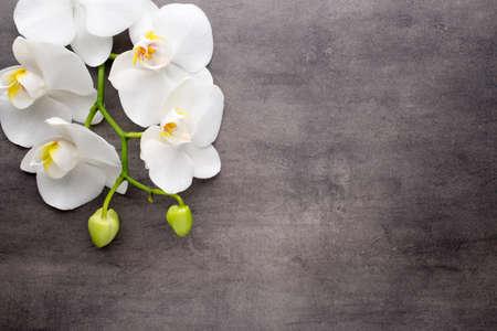 orchidee: Orchidea bianca su sfondo grigio.