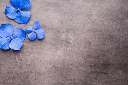 Blue hydrangea on the grey background.
