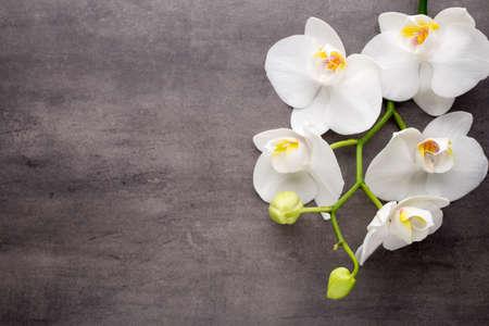 Witte orchidee op de grijze achtergrond.
