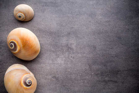 scallops: Scallops on gray stone surface