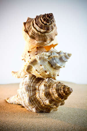 scallop shell: Sea Shells Seashells, sea shells from beach - panoramic - with large scallop shell.