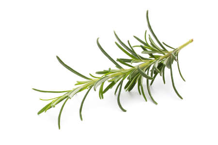 twig: Rosemary twig on the isolated white background. Stock Photo