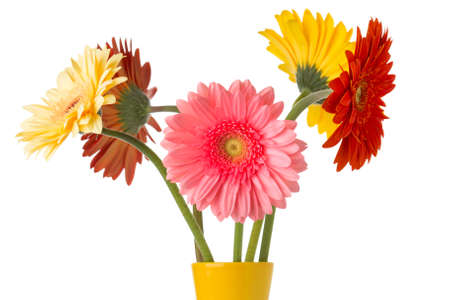 home accents: Gerbera flower on the vase, isolated white background. Stock Photo