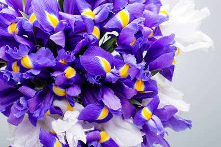 patern: Iris flowers background, spring floral patern. Stock Photo