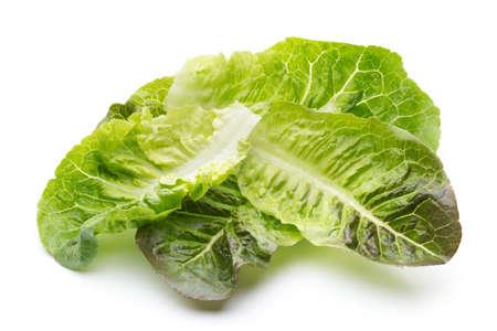 Oak Leaf lettuce isolated on white background. Stock Photo