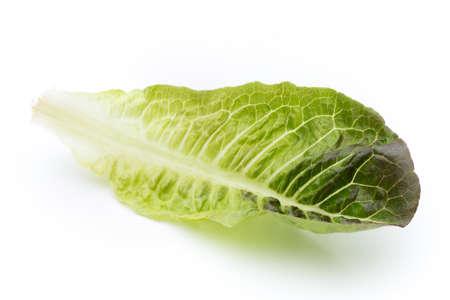 lactuca sativa: Fresh Lactuca sativa leaf isolated on white background.