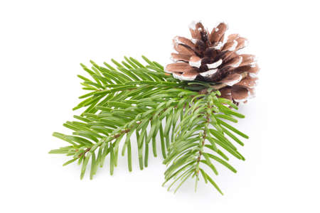 Fir tree branch and cones isolated on white background. Фото со стока