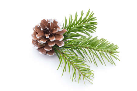 Fir tree branch and cones isolated on white background. Stock Photo