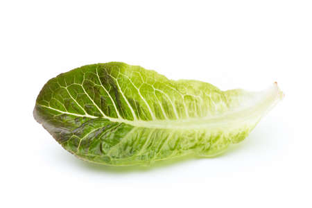 lactuca: Fresh Lactuca sativa leaf isolated on white background.