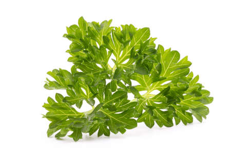 relish: Parsley herb isolated on white background. Stock Photo