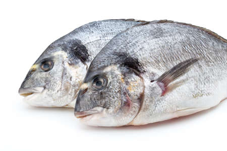 gilt head: Sea bream fresh isolated on white background.