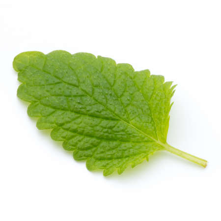 Fresh mint leaves isolated on white background. Stock Photo