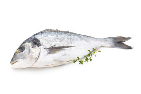 Sea bream fresh isolated on white background.