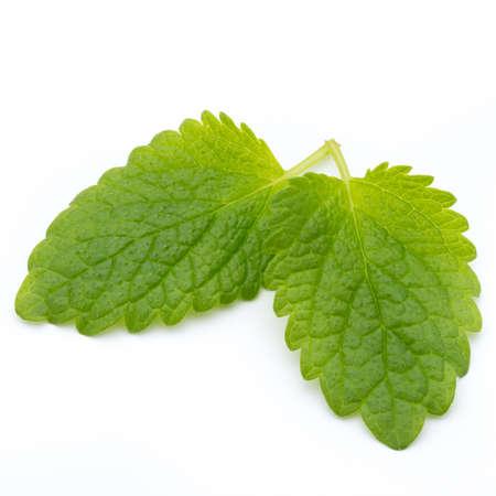 Fresh mint leaves isolated on white background. Stock Photo
