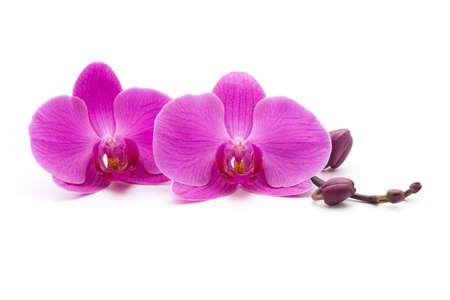 Pink orchids on the white background. Reklamní fotografie