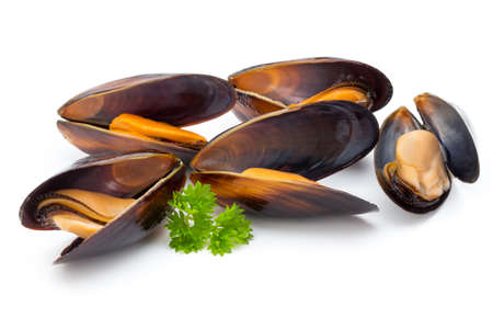 Mussels isolated on white background.