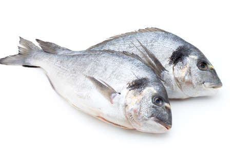 gilthead: Sea bream fresh isolated on white background.