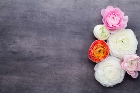 Beautiful flowers, more colored ranunculus on a gray background.