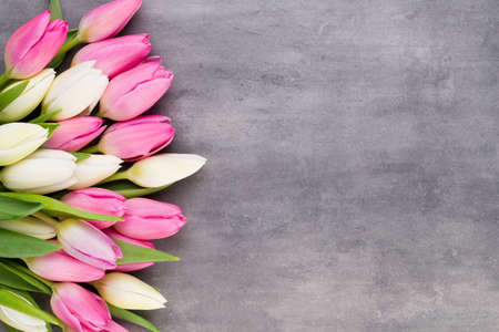 Pink tulip and ribbon, pink eeg. Easter day background.