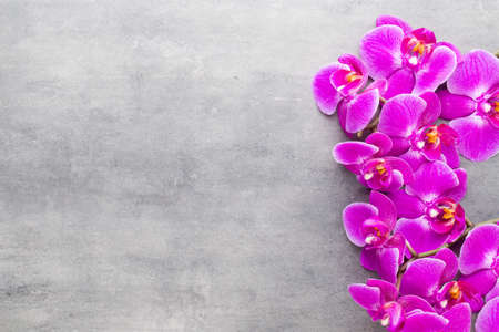 Orchid and spa stones on a stone background. Spa and wellnes scene. Foto de archivo - 99378917