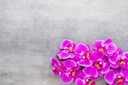 Orchid and spa stones on a stone background. Spa and wellnes scene. Foto de archivo - 99739449