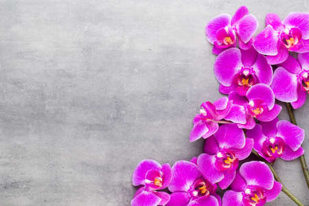 Orchid and spa stones on a stone background. Spa and wellnes scene. Foto de archivo - 100055315