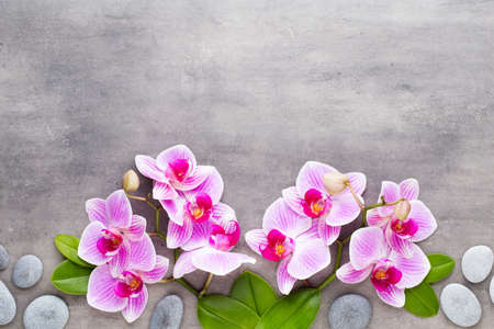 Orchid and spa stones on a stone background. Spa and wellness scene. Banque d'images