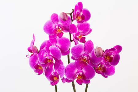 Orchid on a white background. Spa and wellnes scene. Foto de archivo - 100055643