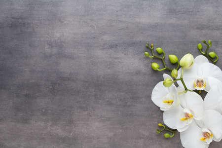 Orquídea y spa piedras sobre un fondo de piedra. Spa y escena wellnes. Foto de archivo