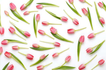 Floral pattern made of pink tulip, green leaves, branches on white background. Flat lay, top view. Valentine's background. Floral pattern. Pattern of flowers. Flowers pattern texture