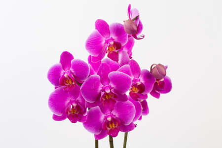 Orchid on a white background. Spa and wellnes scene.