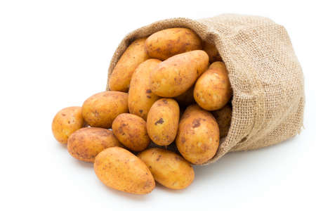 A bio russet potato isolated white background. Stock Photo
