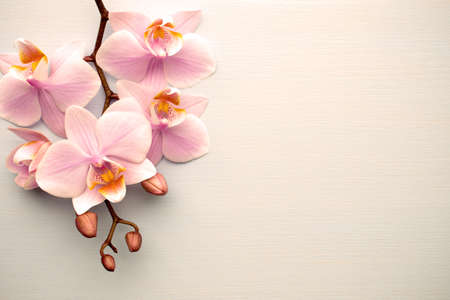 Living coral color orchid on the pastel background.