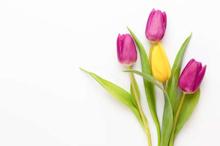 Spring flowers. Tulips on white background. greeting card, Mother day, easter greeting card.