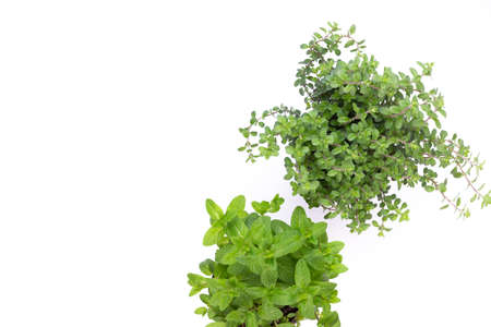 Parsley herb, basil, salvija, leaves, thyme,mint spice on white background. Stok Fotoğraf