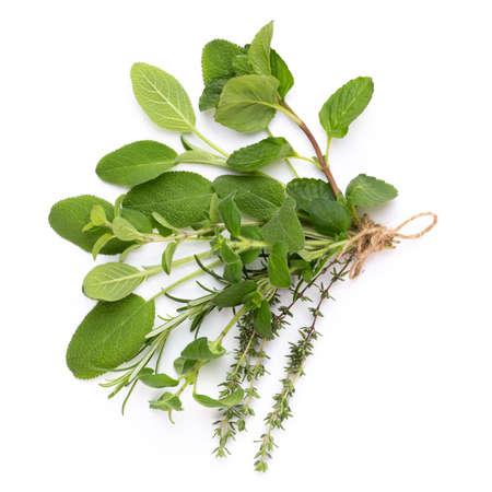 Spice plant isolated on white background. Top view. Flat lay pattern.