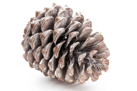 Christmas decor,  pine cone on white background. Standard-Bild