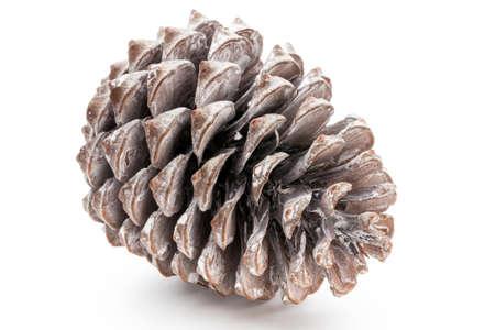 Christmas decor,  pine cone on white background. Archivio Fotografico