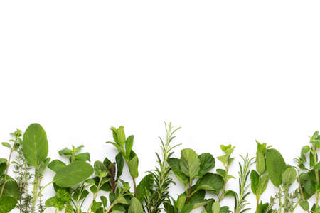 Spice plant isolated on white background. Top view. Flat lay pattern. Banco de Imagens