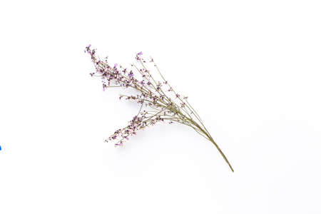 Dried flowers on white background. Flat lay, top view.