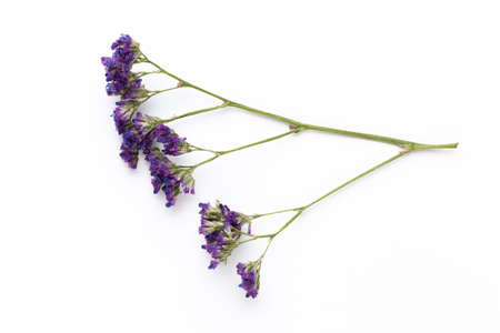 Dried flowers on white Imagens - 124756927