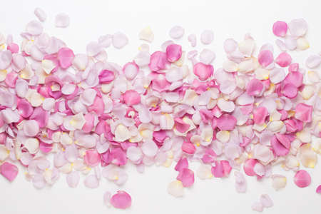 Pastel rose flowers petals on white background. Flat lay, top view, copy space. Reklamní fotografie - 128677092