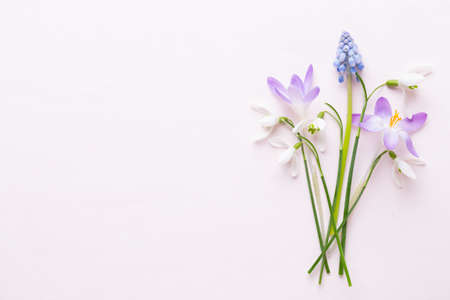 Fresh snowdrops on pink background with place for text. Spring greeting card. Flat lay. Reklamní fotografie - 128677103